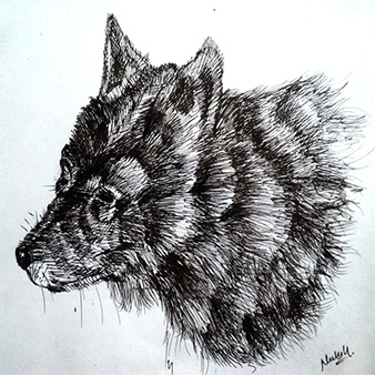 pencil fox drawing
